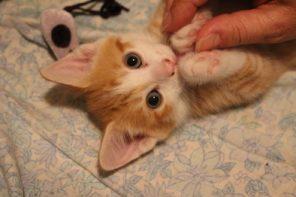 Yeshe the kitten
