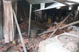 IMG_1677-damaged cow shed-sm
