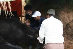 IMG_1998-treating buffalo