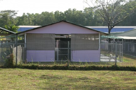 A puppy-mill, Singapore