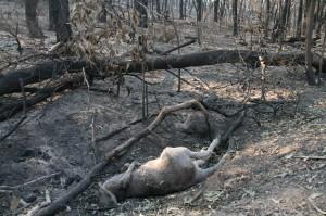 The Fire Ground, Coonabarabran