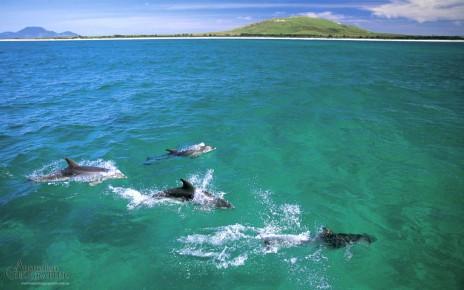 Aus Geo dolphins-sm