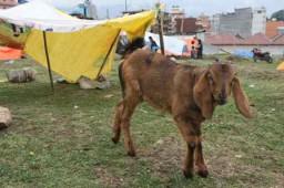 IMG_1488-ww-goat shelter