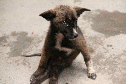 IMG_1580-puppy-sad