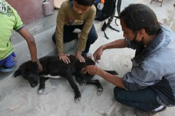 Dr Umesh treats a wounded street dog.