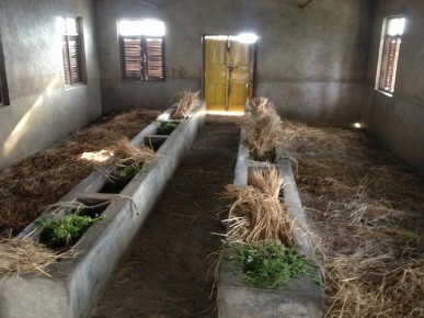 Sanctuary cows' dinner is prepared