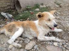 IMG_2620-injured dog near Kopan-web