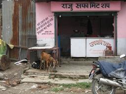 Goats at roadside butcher, Nepal