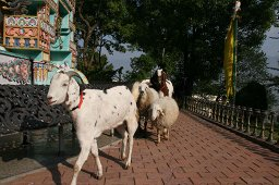 Animal Liberation Sanctuary, Nepal