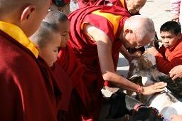 Lamas bless rescued goats, Kopan Monastery, Nepal