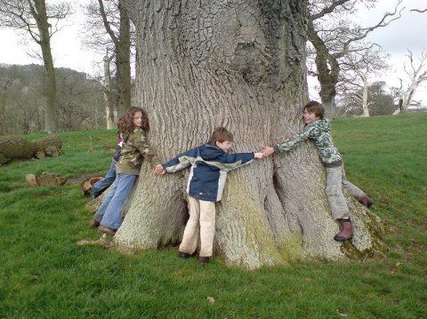 Tree Day Challenge