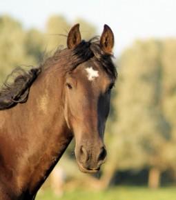 """Say no to horse racing"""